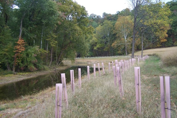 Riparian Buffer & Tree Planting in Romney, WV