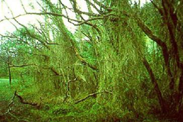 Invasive Species: Successful Efforts & Promising Research