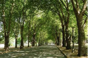 Livable Communities— Greening our Urban Landscapes